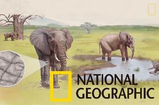 解碼自然:大象的皮膚如何幫助牠們對抗炎熱?