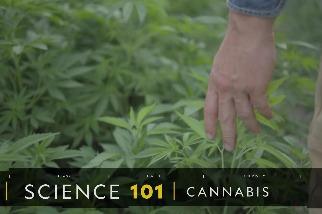 101科學教室:大麻