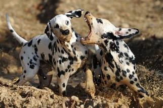 熱愛泥巴的小狗