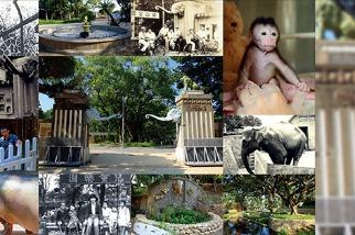 科技城市裡的生態綠島— 重生的新竹動物園