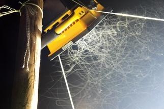 研究證實「光害」是昆蟲末日使者 科學家:關燈就能立刻緩解