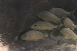 被照亮的魚