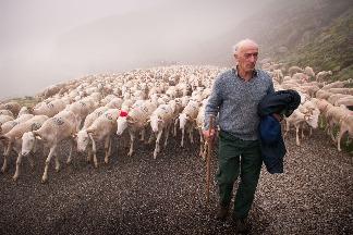 庇里牛斯山的牧羊人