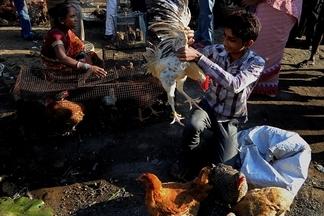 販賣雞隻的男孩