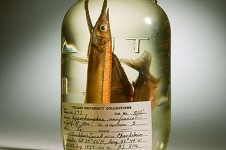 時光定格的魚
