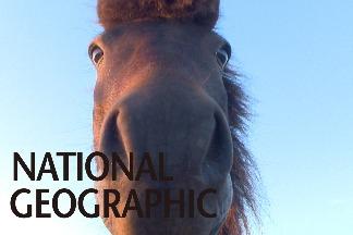 面臨消失危機的「希臘神話之馬」