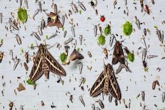 昆蟲都去哪兒了?