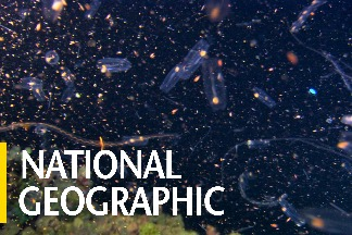 全世界最大規模的動物遷移其實天天都在上演