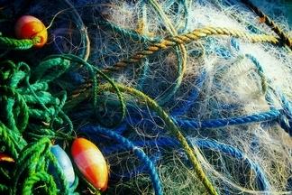 給非目標魚類的「逃生指示燈」 研究:漁網裝LED燈 可使混獲減半