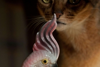 塔茲與鳳頭鸚鵡