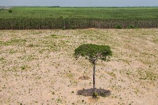 想避免全球大流行,就別再輕賤自然