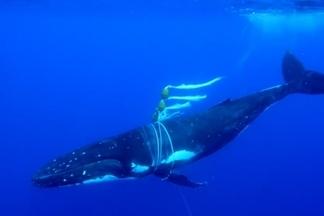 海洋裡不斷抓交替的孤魂野鬼——幽靈漁具
