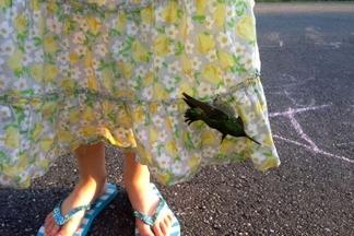愛德蕾的蜂鳥