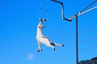 狗狗碼頭跳水比賽