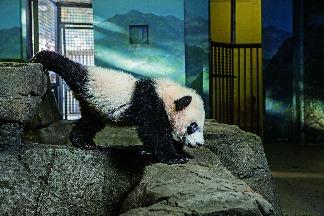 動物園裡的人氣王