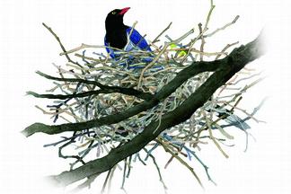 築巢離不開演化