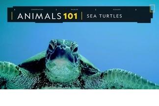 101動物教室:海龜