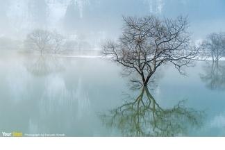 早春的沉水林