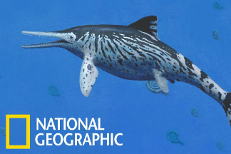 完整魚龍化石與其腹中的胚胎