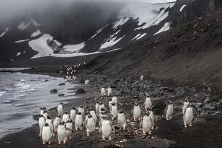 一群南極洲的企鵝