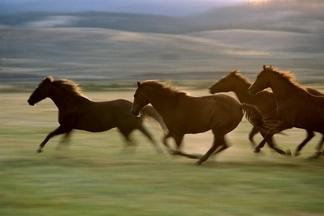 馬兒這麼會跑,其實是近代才發生的事