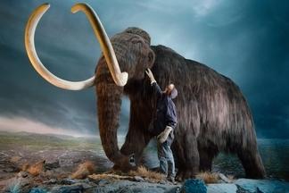 已經滅絕的長毛象,為何被提議該列為「瀕危」?