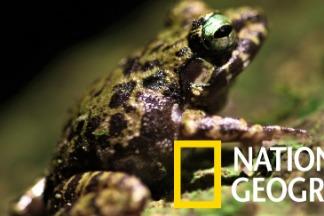 菲律賓呂宋島上的石灰岩小蛙