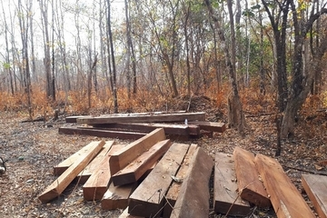 穿著制服的盜伐集團 官商聯手摧毀柬埔寨保護區林地