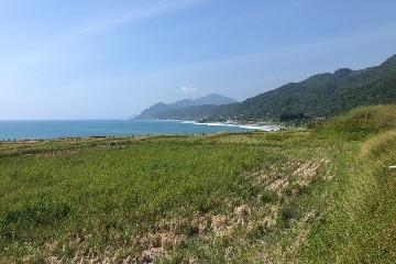 「肥水不落海」 新社海稻田試驗溼地植生緩衝帶 攔截灌肥有一套