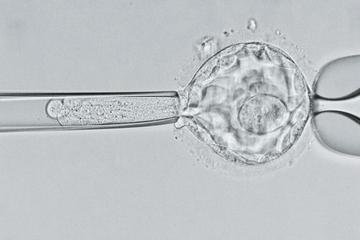 中國「基因編輯寶寶」可能有早逝風險