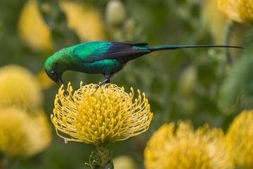 為何南非的鳥更愛「有錢人家」?