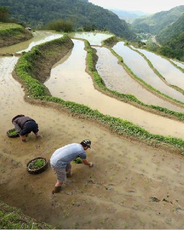 自然平衡 農業永續
