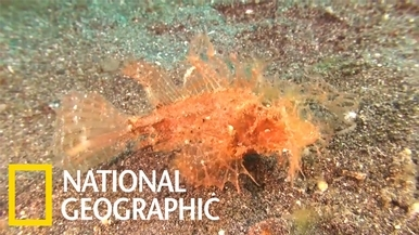 這團海藻怎麼會四處趴趴走?