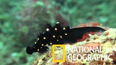 海兔螺身上的凸出物是不是很像迷你荷包蛋呢?
