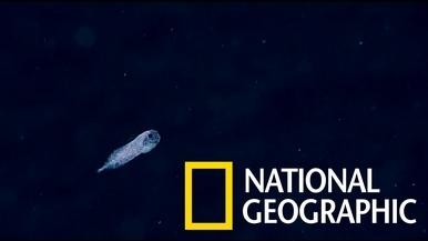 鬼魅般的深海「蝸牛魚」