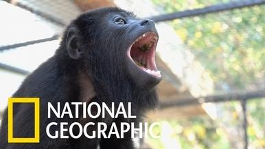 懶吼猴杜麗怎麼有點「顧猴怨」?