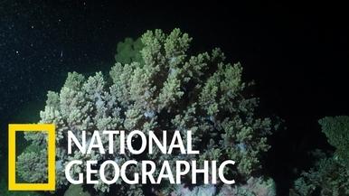 大堡礁一年一度的珊瑚產卵期