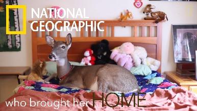 超級短片:小鹿迪麗的新家