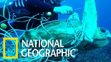 海龜受困漁網,所幸潛水員即時發現