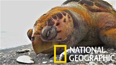 嚴重「赤潮」造成佛羅里達州大量海洋生物死亡