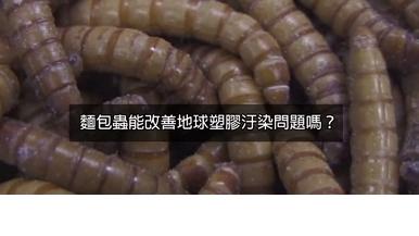 麵包蟲是不是地球塑膠汙染問題的救星?