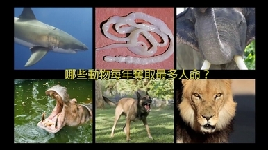 哪些動物每年奪取人命數最多?