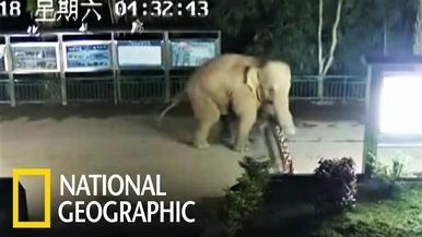 大象說:「國界是什麼?能吃嗎?」