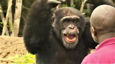 最孤獨的黑猩猩