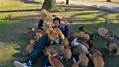 曾是化武基地 這座日本島嶼現在被兔兔大軍收管