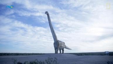 陸生動物體型極限––巴塔哥泰坦巨龍!