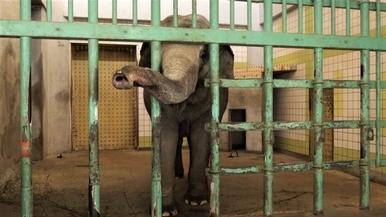 世界上最孤獨的大象