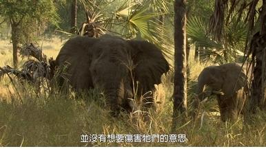 探險直擊:拍攝受創大象