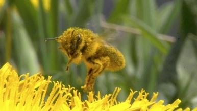 你知道人類依賴蜜蜂已長達9,000年嗎?
