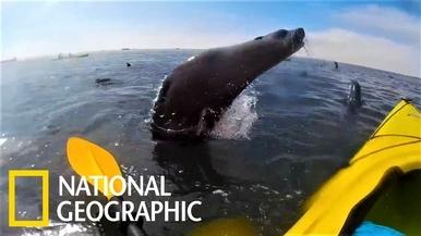 原來是魚雷阿,我還以為是海獅呢!